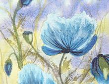 Kort med bilde av blå blomster på en eng. Hvit ramme. Bilde.
