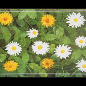 Kort med motiv av hvite og gule blomster på grønt underlag med blader. Bilde.