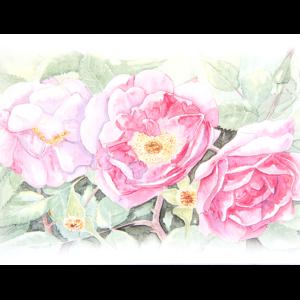 Kort med malt motiv av tre roser på en nypebusk. Bilde.