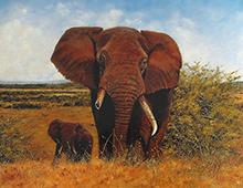 Motiv av en elefant med brukket støttann på savannen sammen med ungen sin. Bilde.