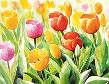 Kort med motiv av fargerike tulipaner.Bilde.