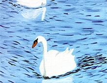 Kort med motiv av hvite svaner på sjøen. Bilde.