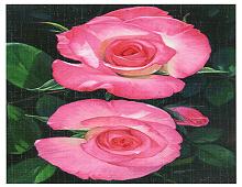 To rosa roser kallt tvillingroser med grønne blader på mørk bakgrunn.