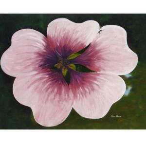 En stor detaljert rosa blomst i mørk bakgrunn.