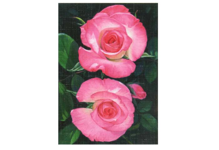 To rosa roser kallt tvillingroser med grønne blader på mørk bakgrunn. Bilde.
