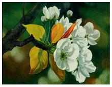 Dobbeltkort med bilde av fruktblomstring. Bilde.